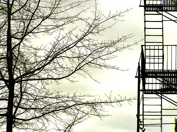 Skeletal Tree and Fire Escape
