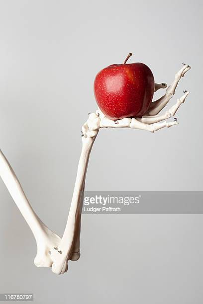 a skeleton arm and hand holding a red apple - human skeleton stock photos and pictures