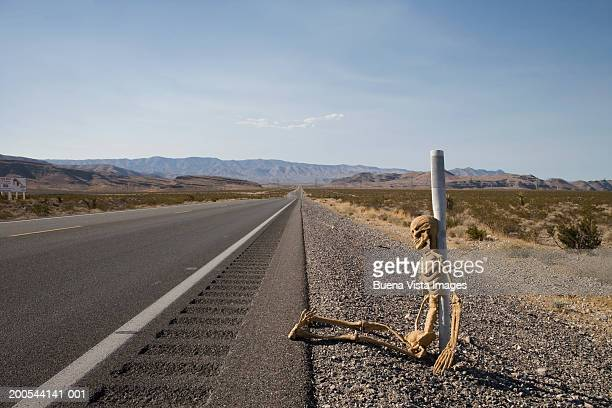 skeleton at side of empty road in desert - funny skeleton stock photos and pictures