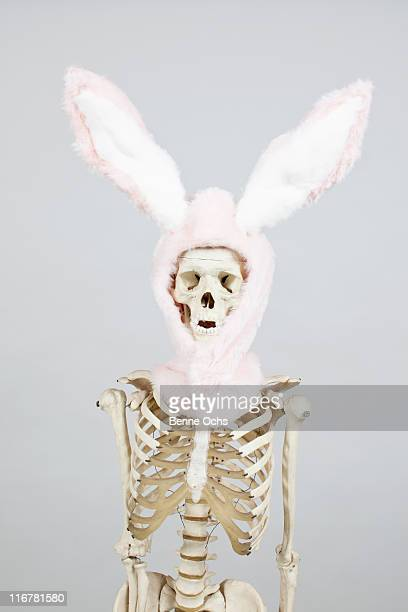 skeleton bunny. - funny skeleton stock photos and pictures