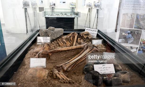 A skeleton from 7500BC is seen at ChaharFasl Museum in Arak Iran on October 5 2016 Human skeletons from 7500BC have become a visitor attraction in...
