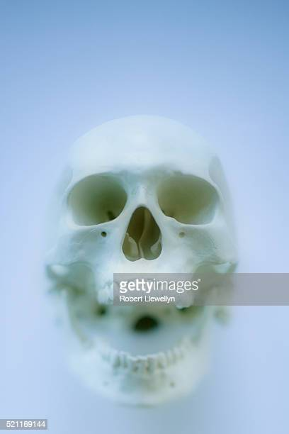 Skeleton head and mouth open