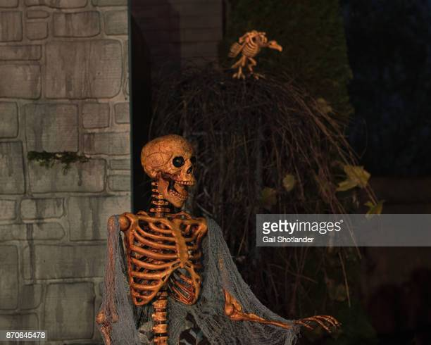 skeleton - human and vulture - animal skeleton stock photos and pictures