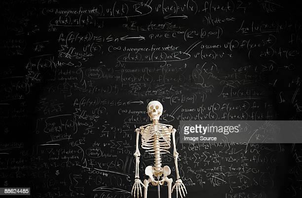 Skeleton in front of blackboard