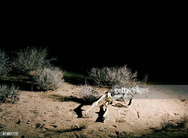 a skeleton in the desert, night - funny skeleton stock photos and pictures