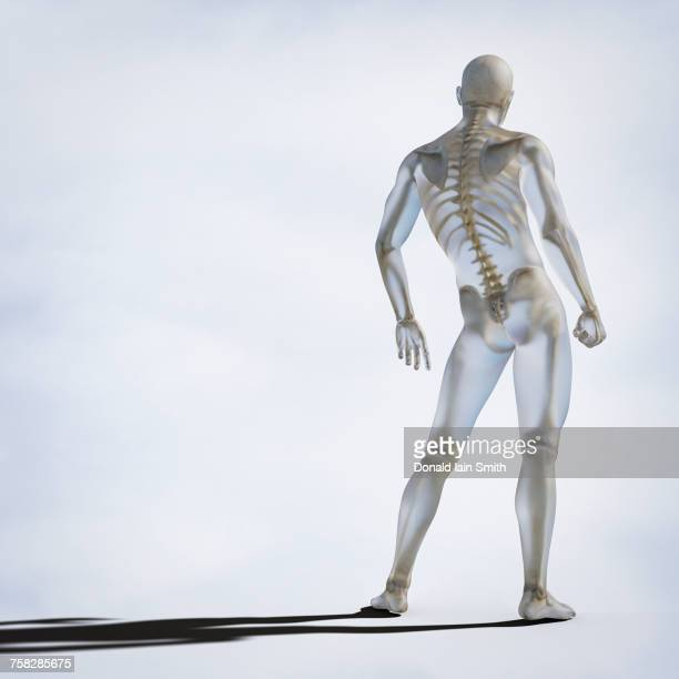 Skeleton inside transparent man