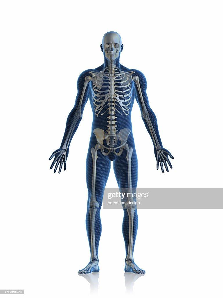 Skelett Mann