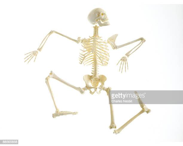 skeleton model 3 - newhealth stock photos and pictures