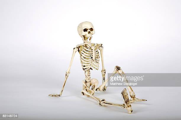 skeleton model - human skeleton stock photos and pictures