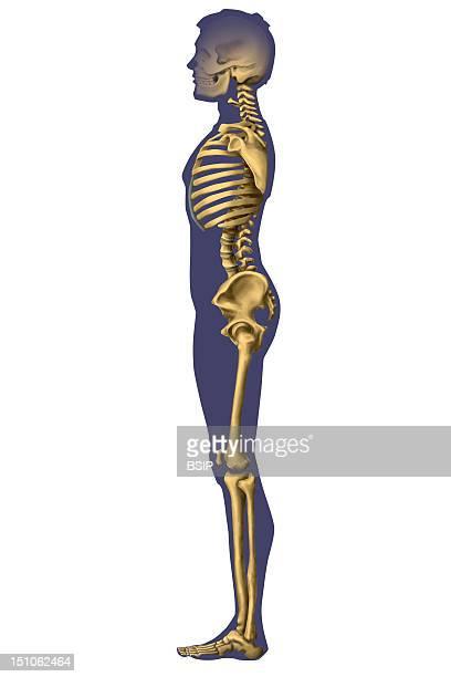 Skeleton Of A Man Profile View