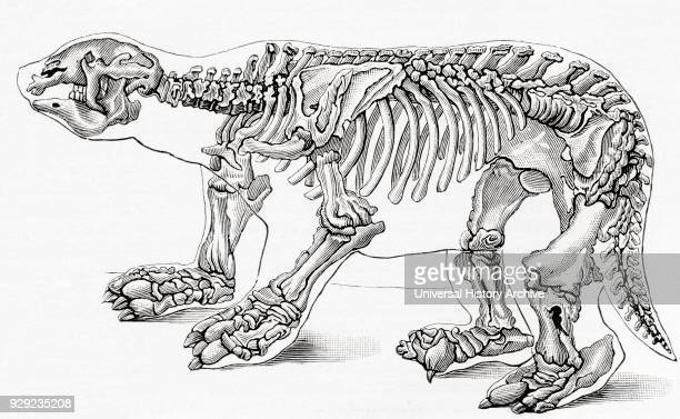 Skeleton of a Megatherium, a genus of elephant-sized ground sloths. From Meyers Lexicon, published 1924.