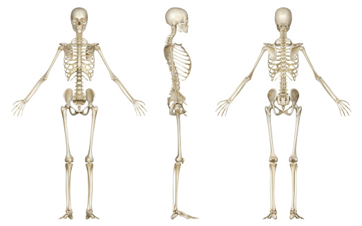 Skeleton of woman, for study 183813498