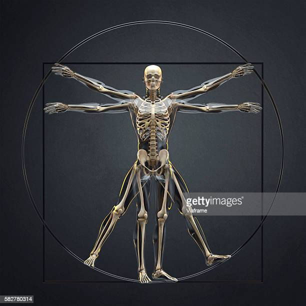 skeleton pose like vitruvian man from da vinci - physiology stock pictures, royalty-free photos & images