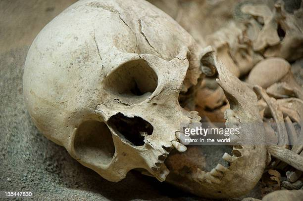 skeleton remains of human looking to the side  - human skeleton stock photos and pictures