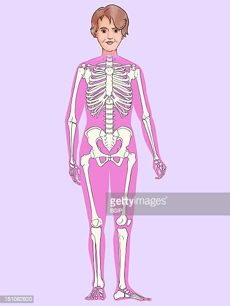 Skeleton See Image 8508906 For The Same Illustration In Another Color