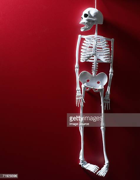 skeleton toy - funny skeleton stock photos and pictures