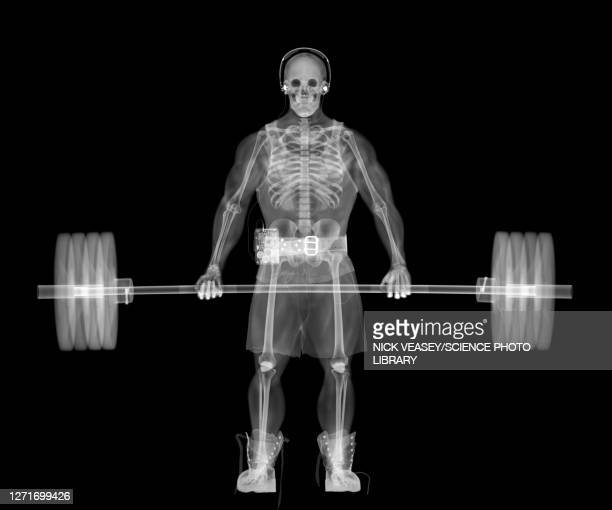 skeleton weightlifter, x-ray - anatomy stock pictures, royalty-free photos & images