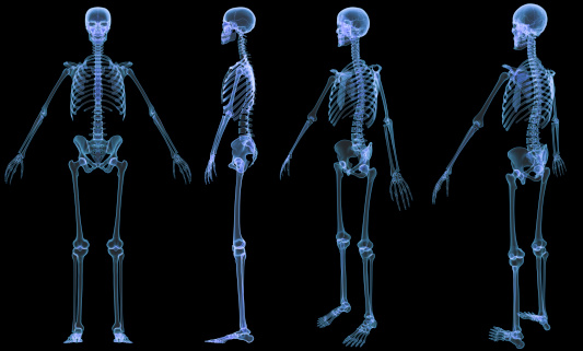 Skeleton-4 views x-ray 136191618