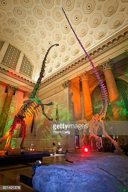 skeletons of dinosaurs with colored lights in the entrance hall - sauropoda stock pictures, royalty-free photos & images