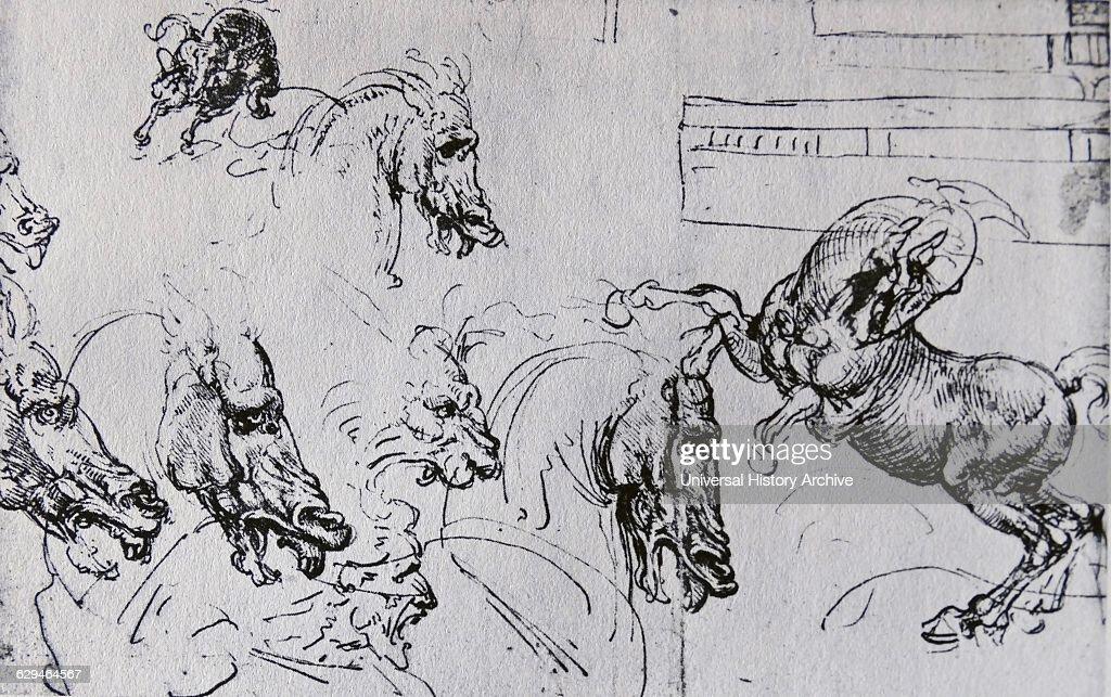 Niedlich Leonardo Da Vinci Anatomie Zeichnungen Galerie - Anatomie ...