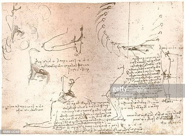 Sketches illustrating the theory of the proportions of the human figure c1472c1519 From The Literary Works of Leonardo Da Vinci Vol 1 by Jean Paul...