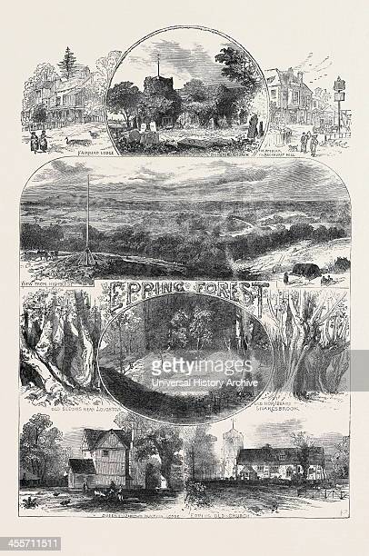 Sketches In Epping Forest 1871