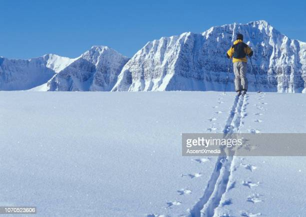 ski mountaineer explores the canadian rockies - ski pole stock pictures, royalty-free photos & images