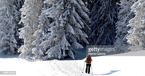 ski runner in a forest - ムジェーヴ ストックフォトと画像