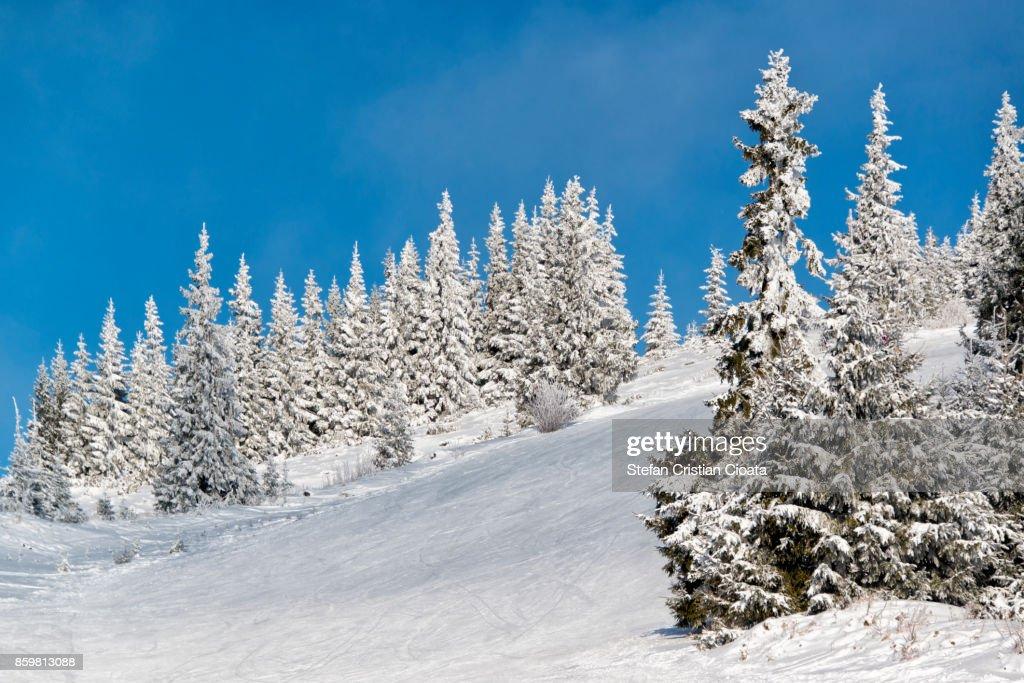 Ski slope in Transylvania : Stock Photo