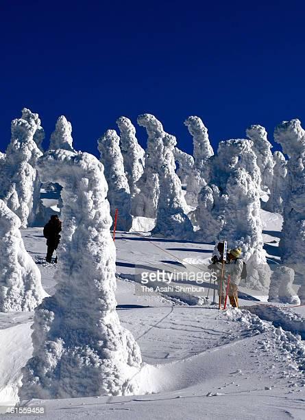 Skiers enjoy rime trees at Ani Ski resort of the Mount Moriyoshi on January 14 2015 in Kitaakita Akita Japan