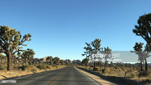 skies above, road ahead and joshua trees all around - dashboard camera point of view stock photos and pictures