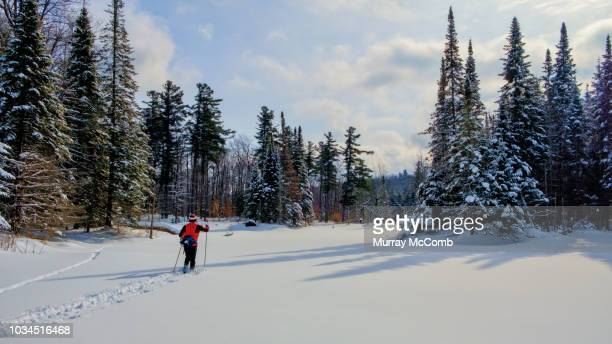 skiing through canadian shield splendor - murray mccomb stock pictures, royalty-free photos & images