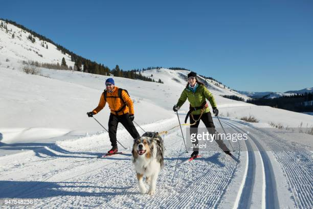 skijoring - winter sport stock pictures, royalty-free photos & images