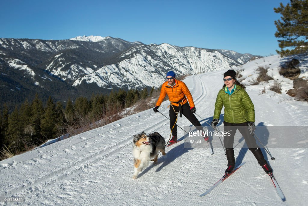 Skijoring : Stock Photo