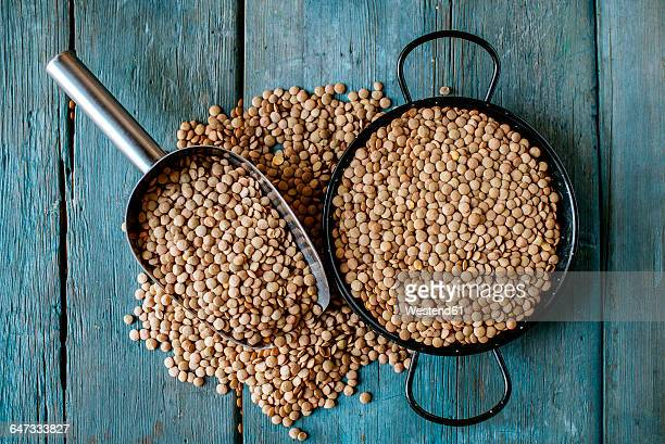 skillet and metal scoop with dried brown lentils on wood - lentil stock pictures, royalty-free photos & images