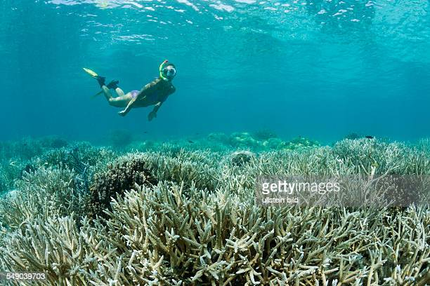 Skin Diver at Shallow Reef Micronesia Palau
