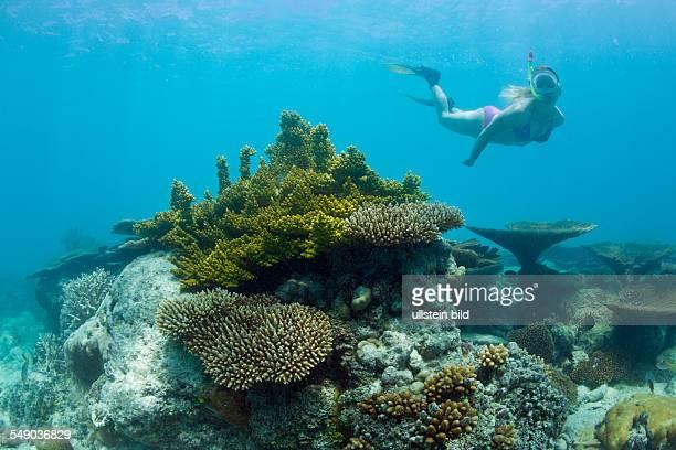 Skin Diver over Corals in Bikini Lagoon, Marshall Islands, Bikini Atoll, Micronesia, Pacific Ocean