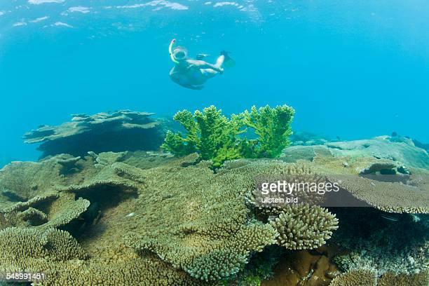 Skin Diver over Table Corals in Bikini Lagoon, Marshall Islands, Bikini Atoll, Micronesia, Pacific Ocean