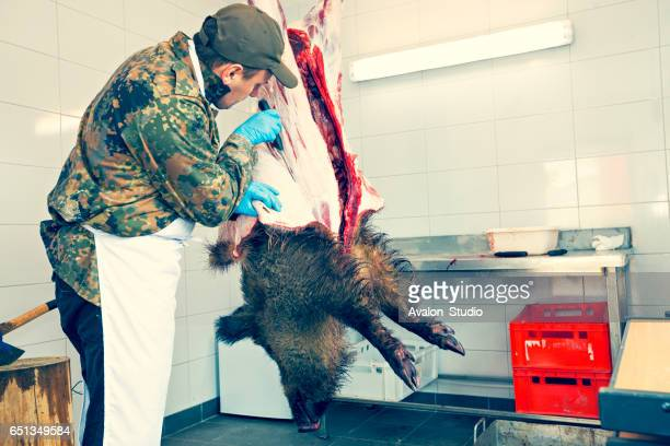 Skinned hunter hunted wild boar