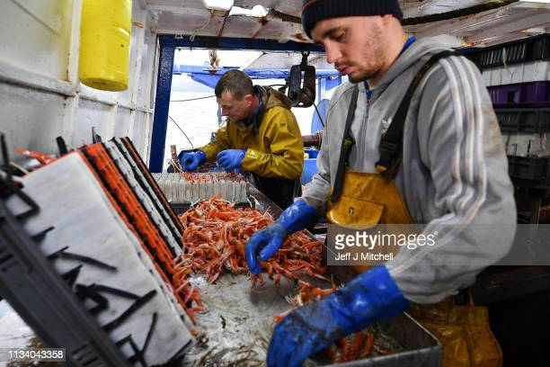 Skipper on the Guide Me prawn trawler Jordan McKee and deckhand Angus Brown sort through a catch from Loch Long on March 5 2019 in Greenock Scotland...