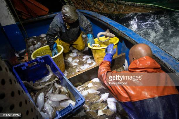 Skipper Stuart Hamilton, and crew member Dan Lee work through a catch while fishing for flatfish such as Skate and Dover Sole in the English Channel...