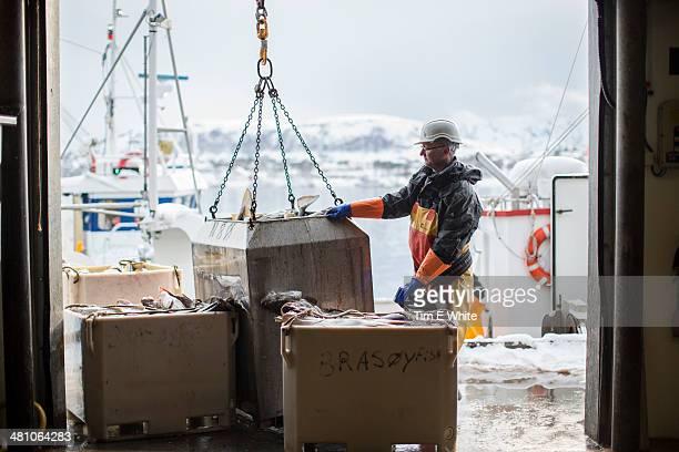Skrei Fishing in the Arctic, Norway, Europe