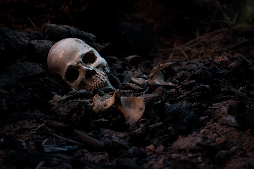 Skull and bones digged from pit in the scary graveyard which has dim light 1057365412
