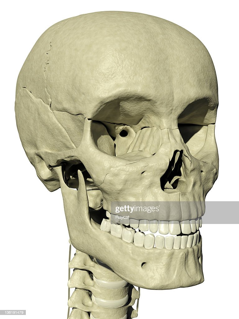 Zygomatic Bone Stock Photos and Pictures | Getty Images