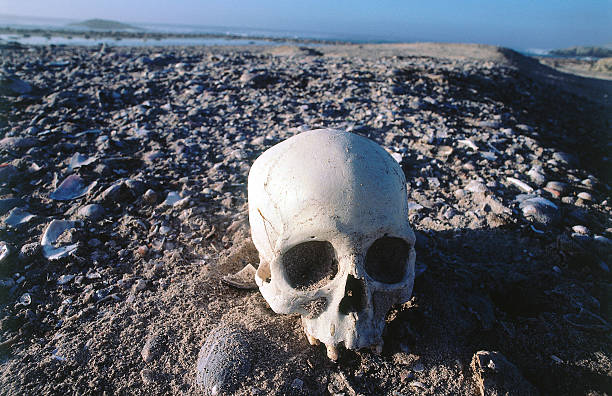 Skull from a midden, an ancient refuse pile, sits on rocky soil. San Miguel Island, Channel Island National Park, California.