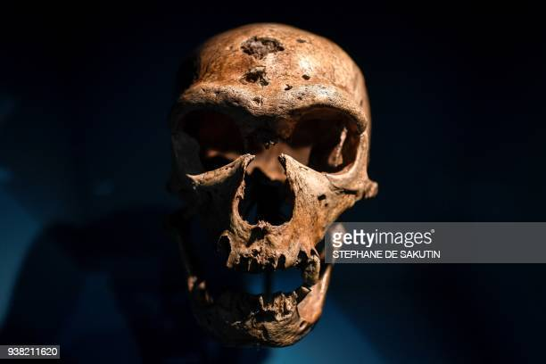 Skull is displayed as part of the Neanderthal exhibition at the Musee de l'Homme in Paris on March 26, 2018. / AFP PHOTO / STEPHANE DE SAKUTIN