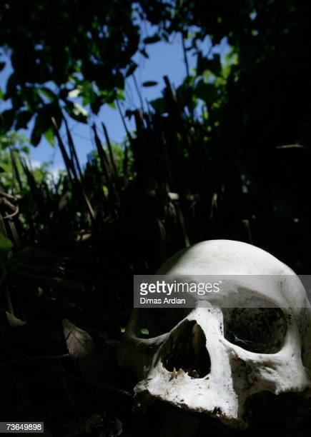 Skull is seen at a village cemetery in Kuban on March 21, 2007 near Trunyan, Bali resort island, Indonesia. Unlike the Balinese people, the people of...