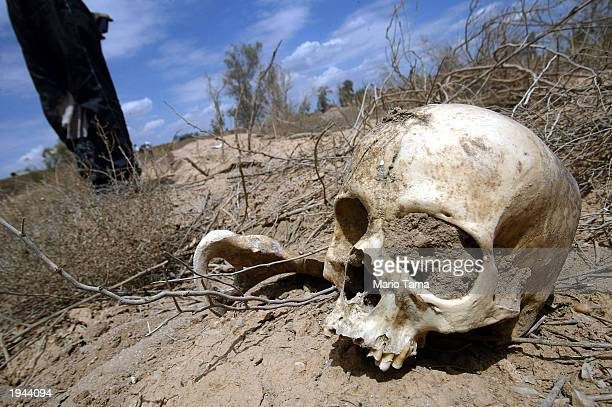 A skull is seen at the alQarah cemetery in a plot with almost 1000 numbered graves most of them bodies taken from the nearby Abu Ghraib prison during...
