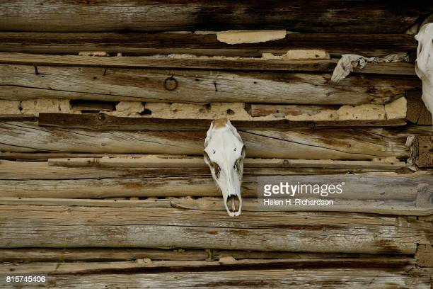 A skull of a steer hangs on the outside of one of the many ranch buildings on the Nottingham Ranch on July 11 2017 in Burns Colorado The Nottingham...