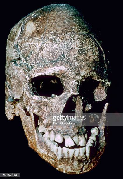 Skull of 'Grimaldi man' an adolescent discovered in Baoussé Rossé one the Cote de Azure It is debated whether he is neanderthal cromagnon or...